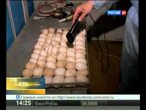 microel.info - Инкубаторы Микроэл в программе ВЕСТИ РОССИЯ24