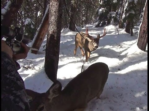 Curious deer sniffs hunter's pants