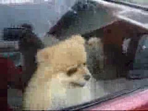 Dogs Barking in CARS!