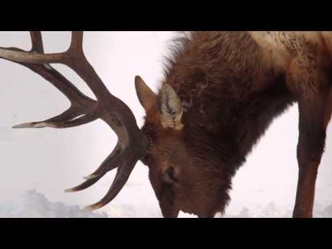 Jackson Hole Snow Video