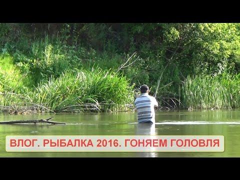 видеоблоги о рыбалке
