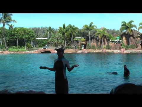Sea World Imagine Dolphin Show, Gold Coast QLD