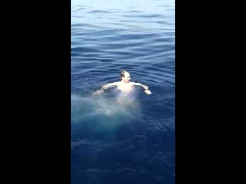Close call on fishing trip. (shark)