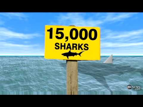 Thousands of SHARKS Shut Down Florida Beaches | SHARKS At Florida Beach