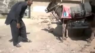 Funny pakistani With Donkey :D