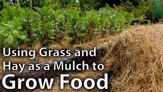 Using Hay and Grass as Mulch to Grow Food