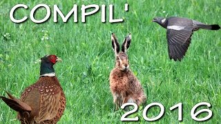 COMPILATION CHASSE PETIT GIBIER CAL. 28 & 410 PHEASANT BEST OF HUNTING/CACCIA SELVAGGINA/CAZA MENOR/