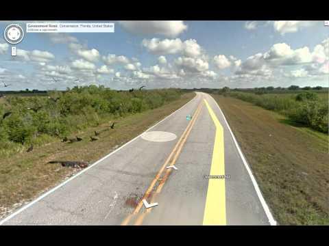 Turkey Vultures Eating Alligator Roadkill on Google Street View!