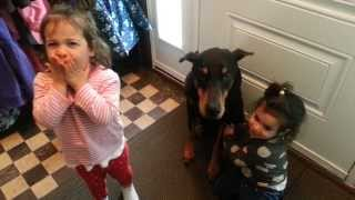 Doberman getting love from the twins...
