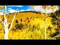 A Look At Aspen Vista During Autumn Colorfest, Santa Fe, NM