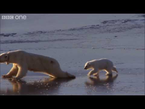 HD: 'Ice Skating' Polar Bears - Nature's Great Events: The Great Melt - BBC One