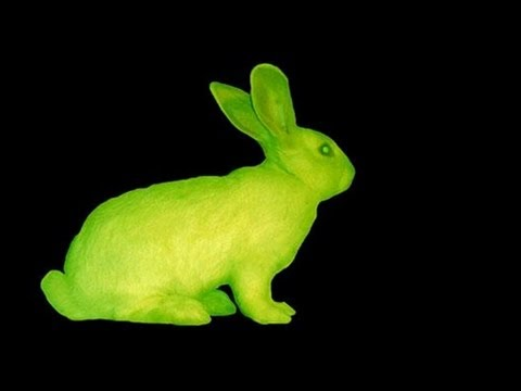 gfp bunny essay 10 times scientists genetically modified animals and came up with some weird results known as the gfp bunny, an albino rabbit that fluoresced under blue light.