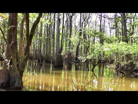 SWAMP TOUR - Ebro Florida