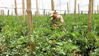 Escuela de Campo: Productividad en los sistemas de riego - 7 de octubre