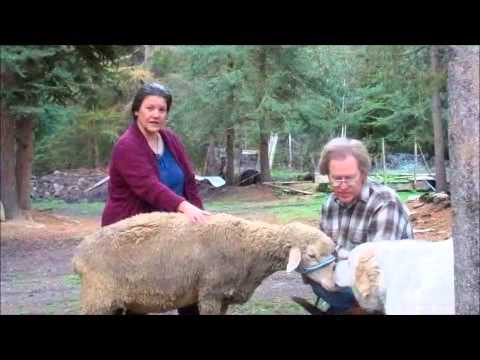 Beef, Pork, and Lamb how to cook different cuts of meat