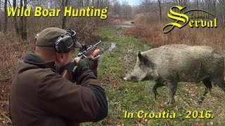 Wild boar hunting in Croatia 2016 - part 2 - Drückjagd in Kroatien 2016