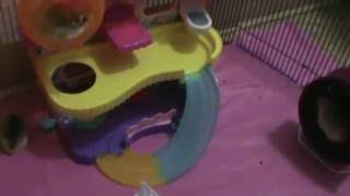 Funny hamsters video. Our robo dwarf hamsters on the playground Triplets on the playground