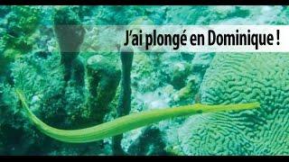 Plongée en Dominique !