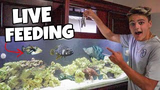 FEEDING SALTWATER AQUARIUM LIVE BAIT FISH!!!