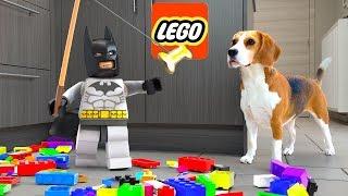 Lego DC Super Villain Batman in Real Life Vs Funny Dogs   Family Matters