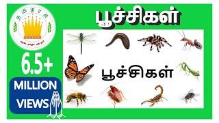 பூச்சிகளின் பெயர்கள் |Learn  Tamil Bugs and Insects Name for Kids