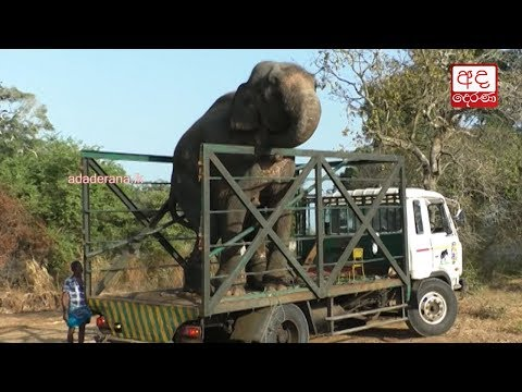 how tusker was taken|eng