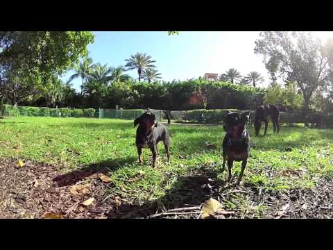 Hunter Tours the Dog Parks of Miami-Dade
