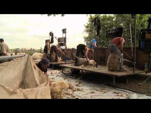 Blood, Sweat & Shears - The Gritty reality of Sheep Shearing HD