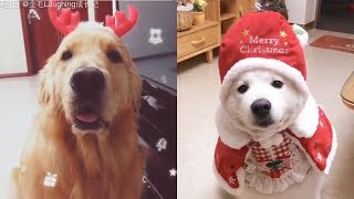 Cute Dogs and Cats Love Christmas | Funny Cats and Dogs Videos Compilation #12