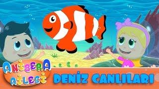 Anibera Ailesi | Deniz Canlılarını Tanıyalım  | Çocuk Masalları | Eğitici Videolar