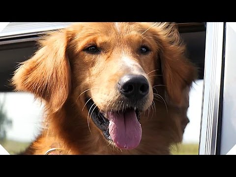 A DOG'S PURPOSE Movie TRAILER (Family - 2017)