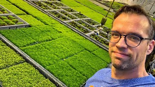 Exclusive Tour of the Tropica Aquarium Plants Moss Facility