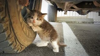 Funny Animals 😍🐱 Cute Cats Getting Scared (Full) [Funny Pets]