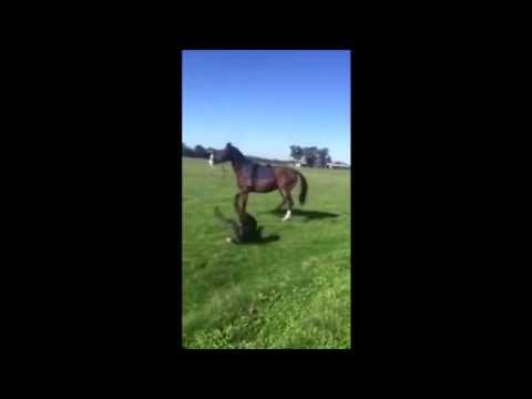 Girl Horses Horse Kicks Girl in The Face