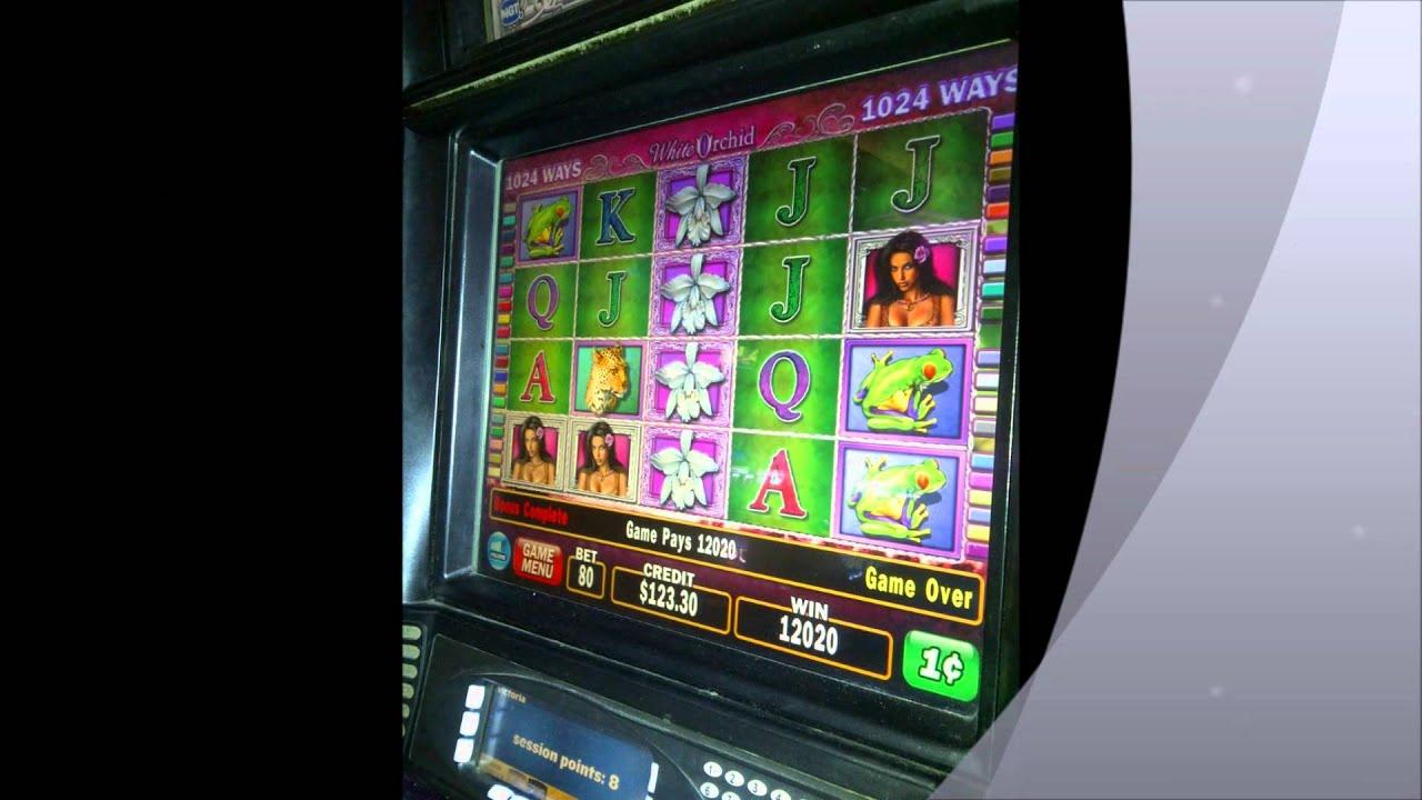 white orchid slot machine casino wins