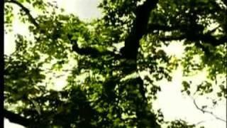 Vídeo 110 de Enya