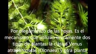 MORFOLOGÍA Y FISIOLOGÍA DE LAS PLANTAS CARNÍVORAS