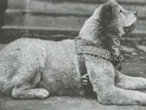 Hachiko The True Story of a Loyal Dog Hachiko's True Story a Dog's