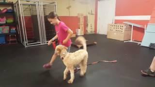 Dog Training Trick Training   Trick Training Class for Kids   Solid K9 Training Dog Training
