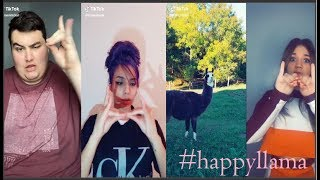 Happy llama TikTok  Videos Compilation  #happyllama