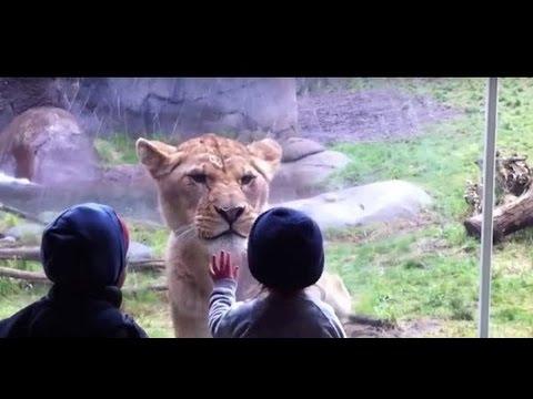 Смешные и опасные случаи в зоопарке