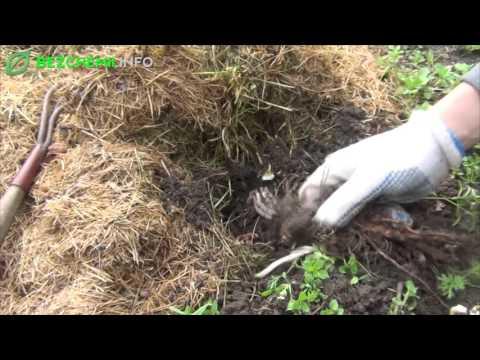 Jak usuwać chwasty z ogródka? Odchwaszczanie grządek