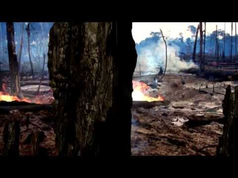 WWF Rainforest: Deforestation Effects