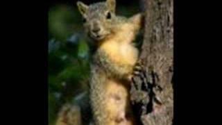 Watch Cledus T Judd Goodbye Squirrel video
