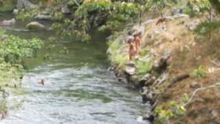 indian kids  from the  Finca Florentina swimming  in the chiriqui river