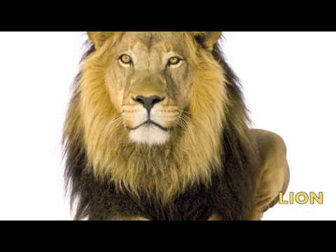 Animal Sounds for Children - HD