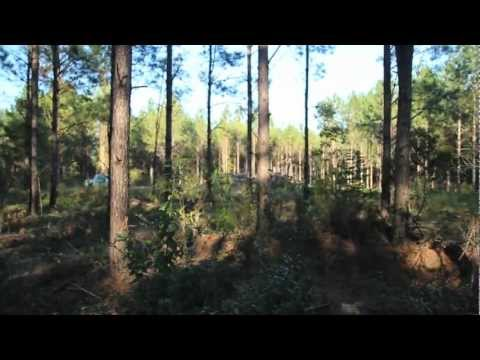Pine Tree Management for Deer Hunting: Bits and Pieces - The Management Advantage #12