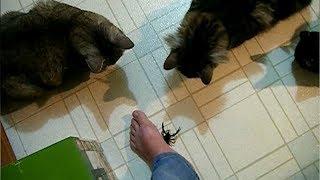 FUNNIEST CLIPS of CATS, DOGS and other animals - LAUGHING GUARANTEED!