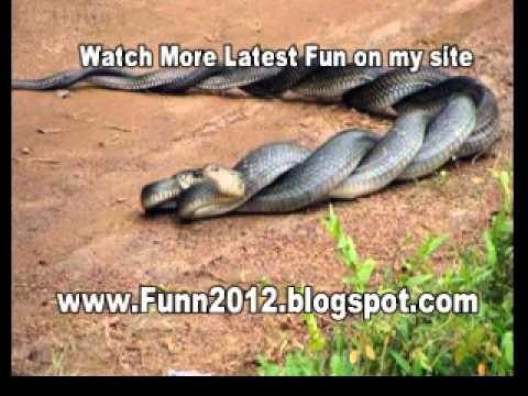 Funny Videos, Funny Video Clips and Funny Animal Videos
