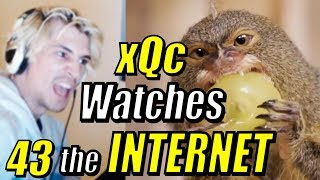 "xQc Reacts to ""Daily Dose of Internet"" with Chat 